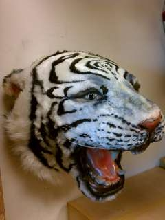 LIFE SIZE White Tiger Head Wall Mount Taxidermy Teeth