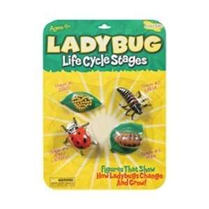 Insect Lore Life Cycle Stages Ladybug; 3 Items/Order