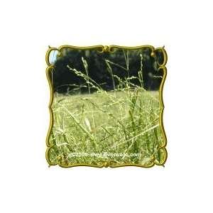 Lb   Nodding Fescue   Bulk Wild Grass Seeds Patio, Lawn & Garden