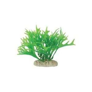 ELEMENTS ANTLER FERN, Color: GREEN; Size: 5 6 INCH: Office Products