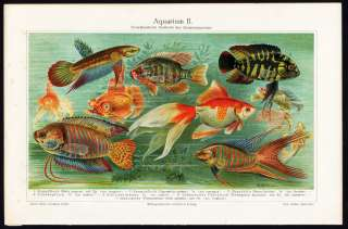Antique Print TROPICAL FISH AQUARIUM Meyers 1897