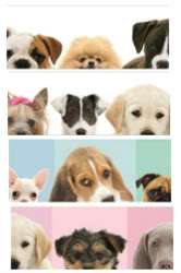 Breed Puppies Mural Style PrePasted Wallpaper Wall Border Color Choice